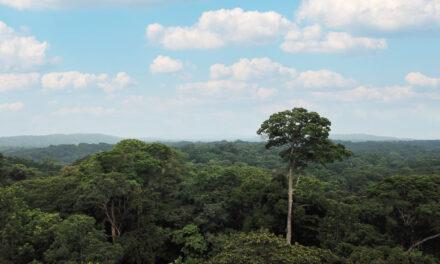 PRECIOUS WOODS – Wälder der Umwelt zuliebe nutzen